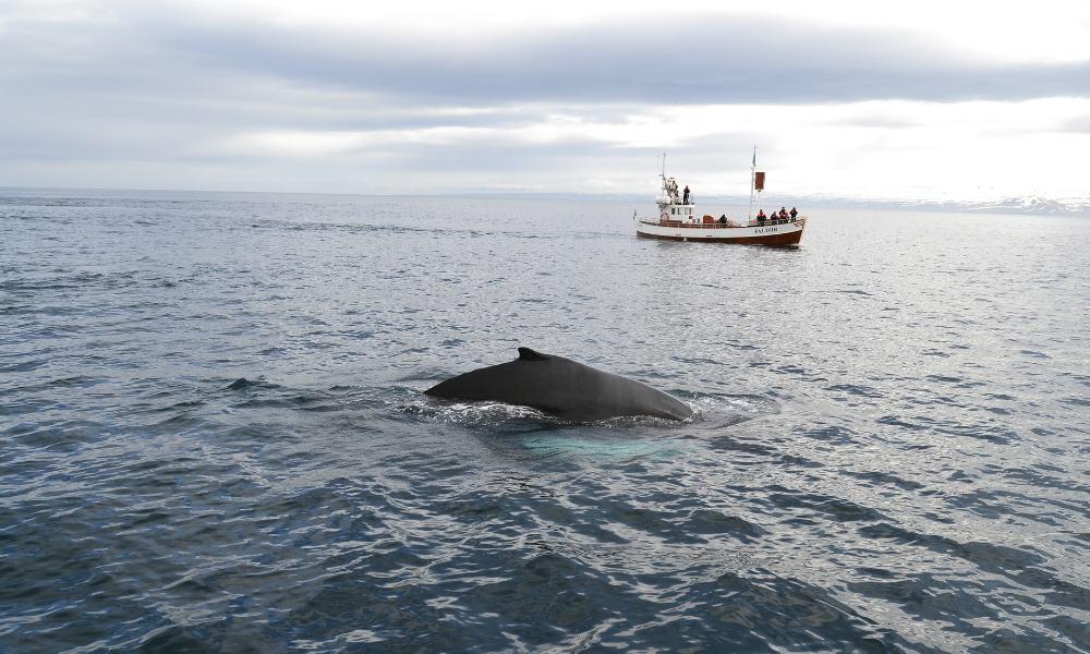 Whale, ballena