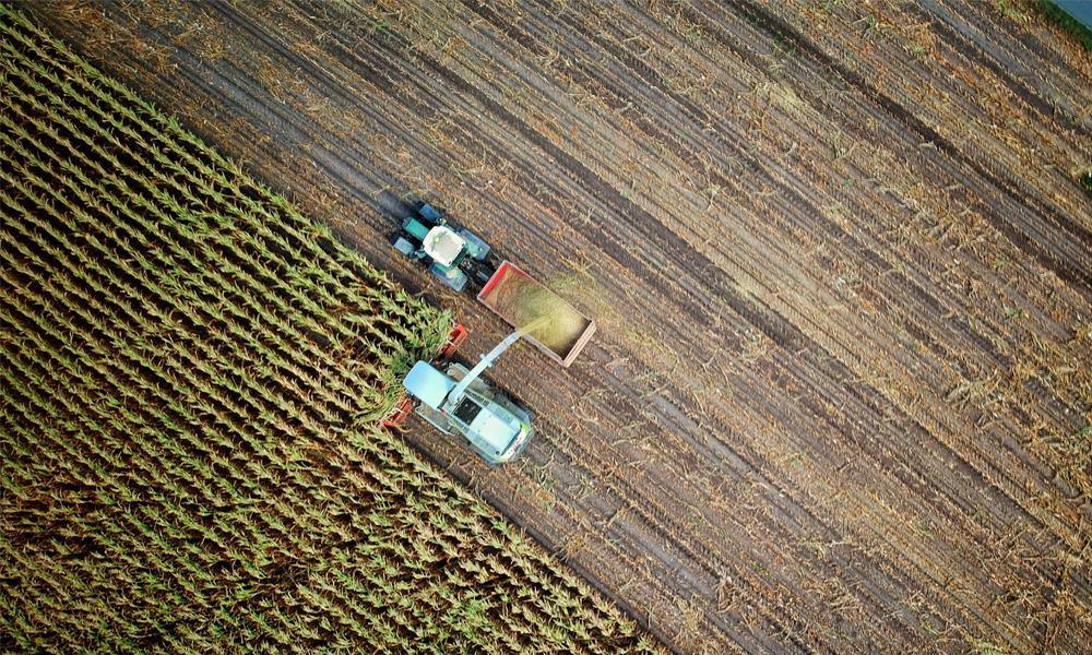 Sembrando Vida contempla la siembra de árboles maderables y frutales. (Foto: Unsplash)