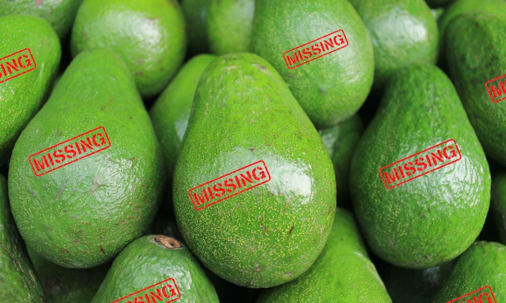 Aguacate, Avocado
